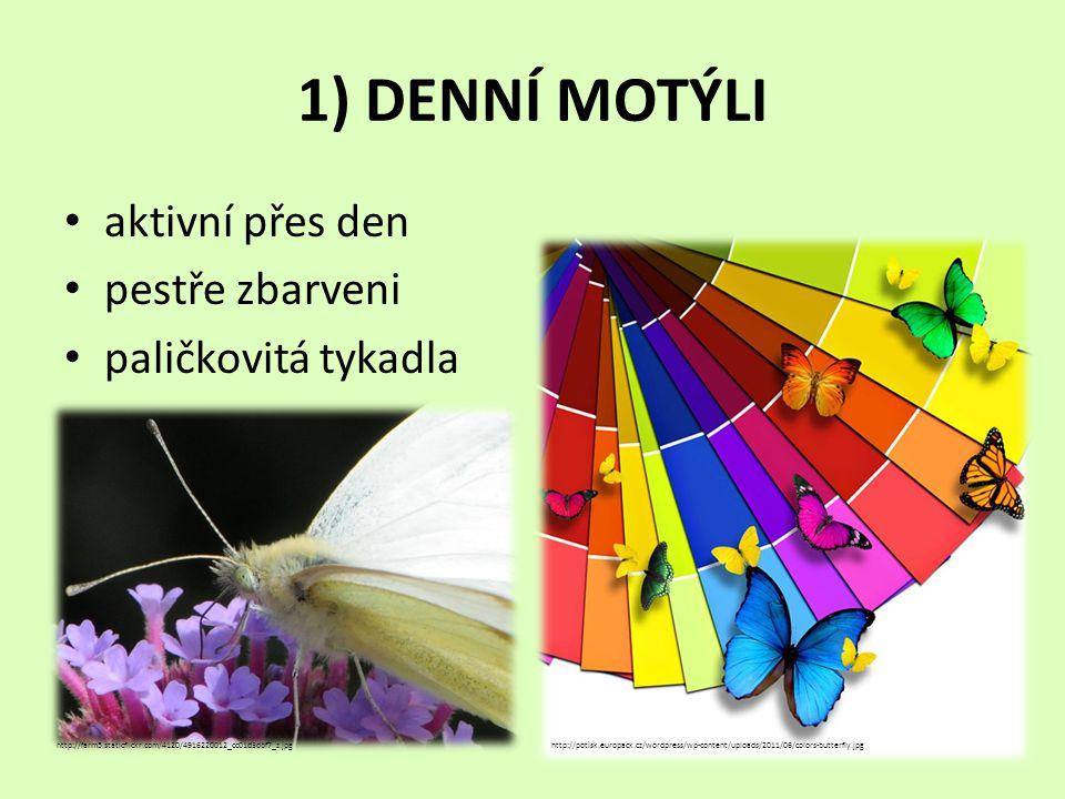 1) DENNÍ MOTÝLI aktivní přes den pestře zbarveni paličkovitá tykadla