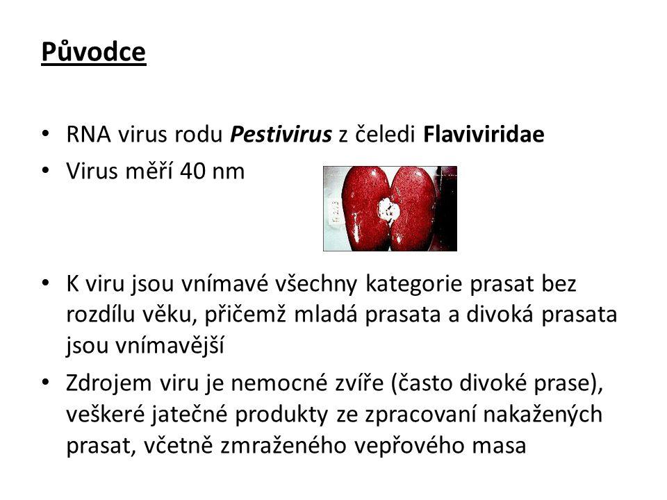 Původce RNA virus rodu Pestivirus z čeledi Flaviviridae