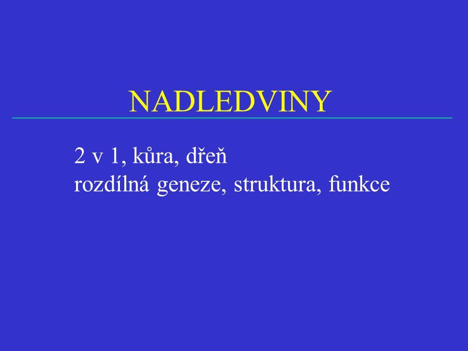 NADLEDVINY 2 v 1, kůra, dřeň rozdílná geneze, struktura, funkce