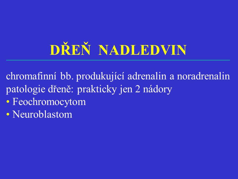DŘEŇ NADLEDVIN chromafinní bb. produkující adrenalin a noradrenalin