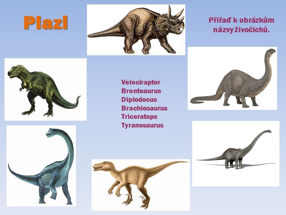 Plazi Přiřaď k obrázkům názvy živočichů. Velociraptor Brontoaurus