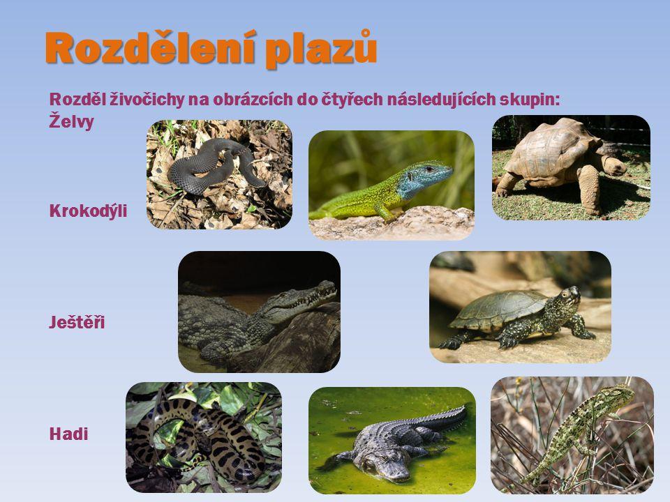 Rozdělení plazů Rozděl živočichy na obrázcích do čtyřech následujících skupin: Želvy. Krokodýli. Ještěři.