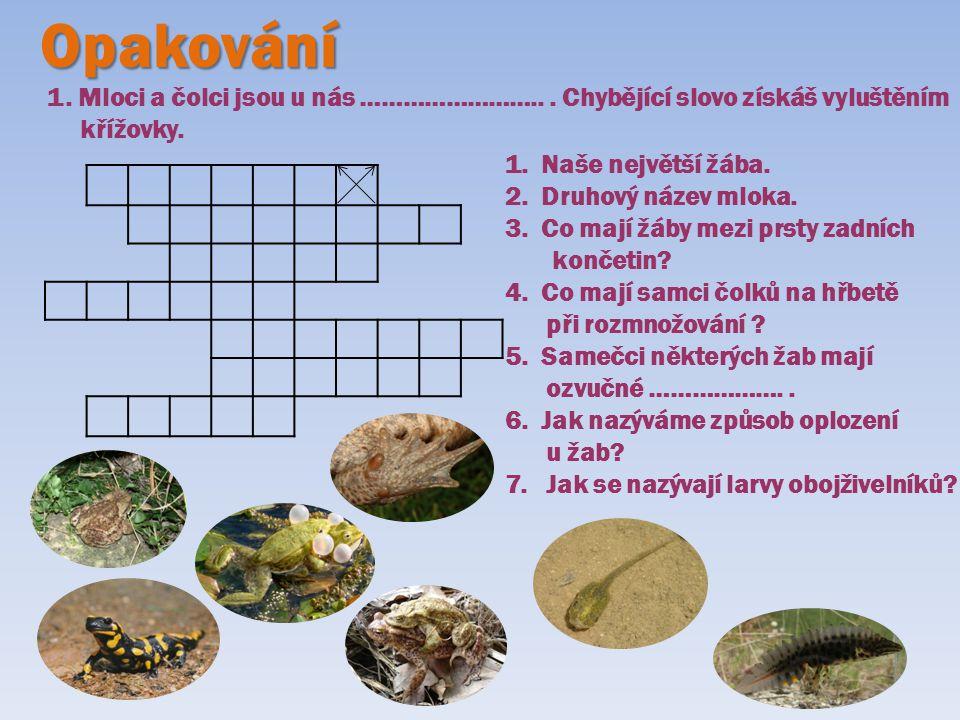 Opakování 1. Mloci a čolci jsou u nás …………………….. . Chybějící slovo získáš vyluštěním. křížovky. Naše největší žába.