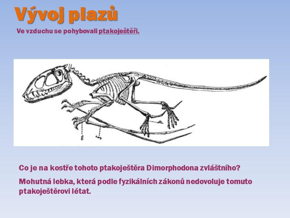 Vývoj plazů Ve vzduchu se pohybovali ptakoještěři. Co je na kostře tohoto ptakoještěra Dimorphodona zvláštního