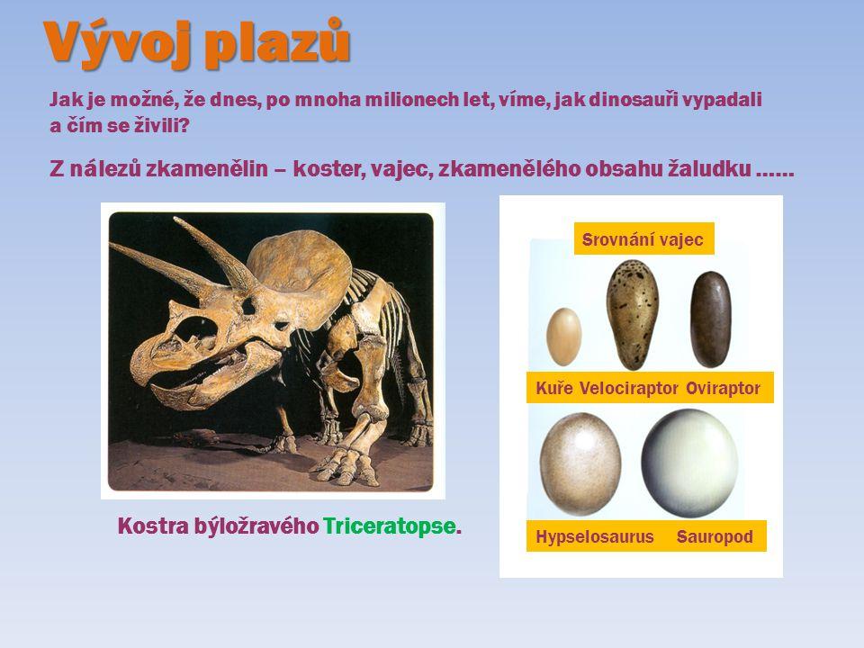 Vývoj plazů Jak je možné, že dnes, po mnoha milionech let, víme, jak dinosauři vypadali. a čím se živili