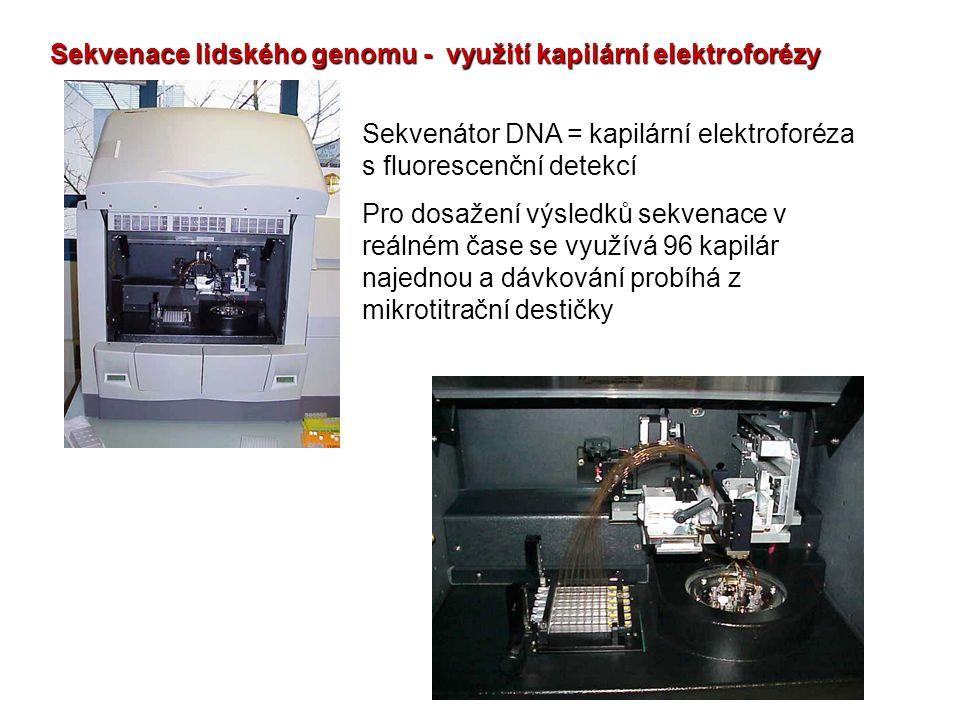 Sekvenace lidského genomu - využití kapilární elektroforézy