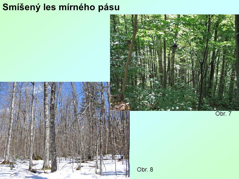 Smíšený les mírného pásu