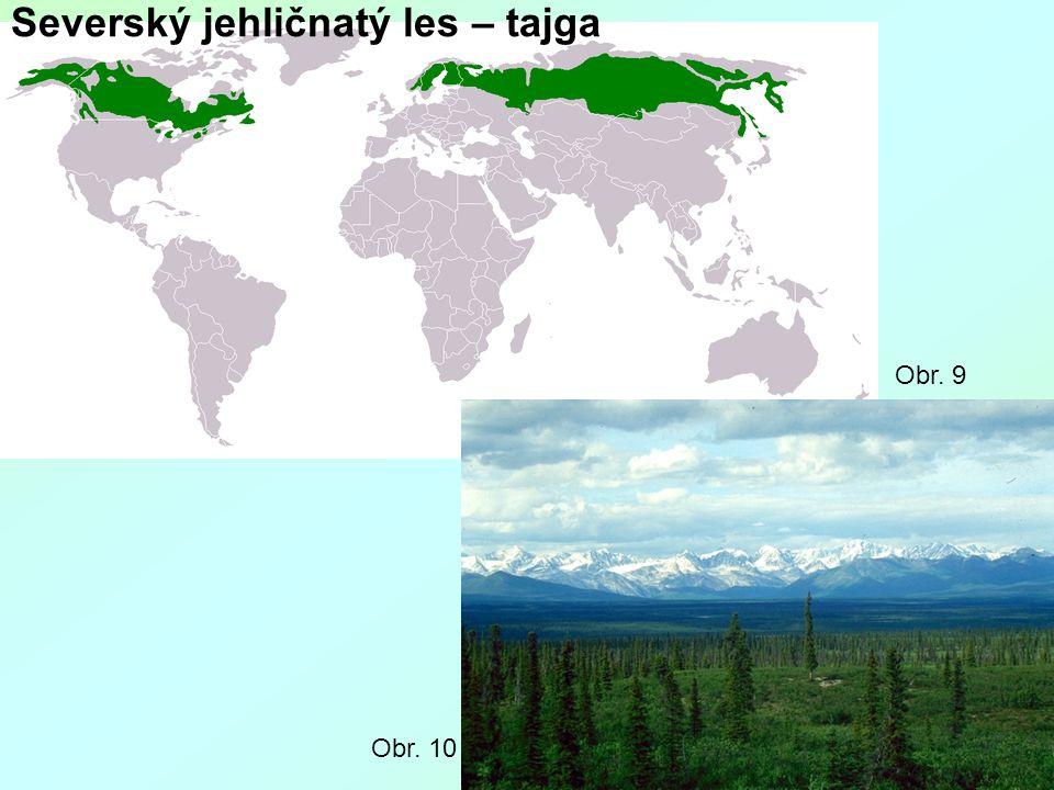 Severský jehličnatý les – tajga