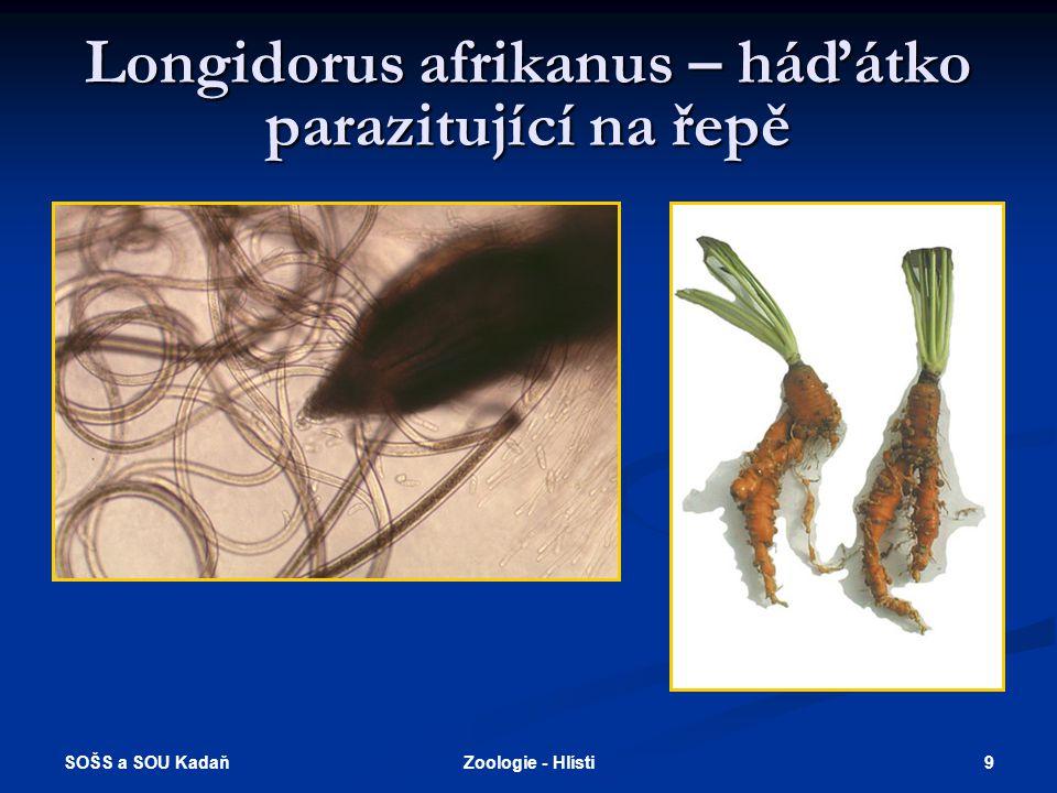 Longidorus afrikanus – háďátko parazitující na řepě