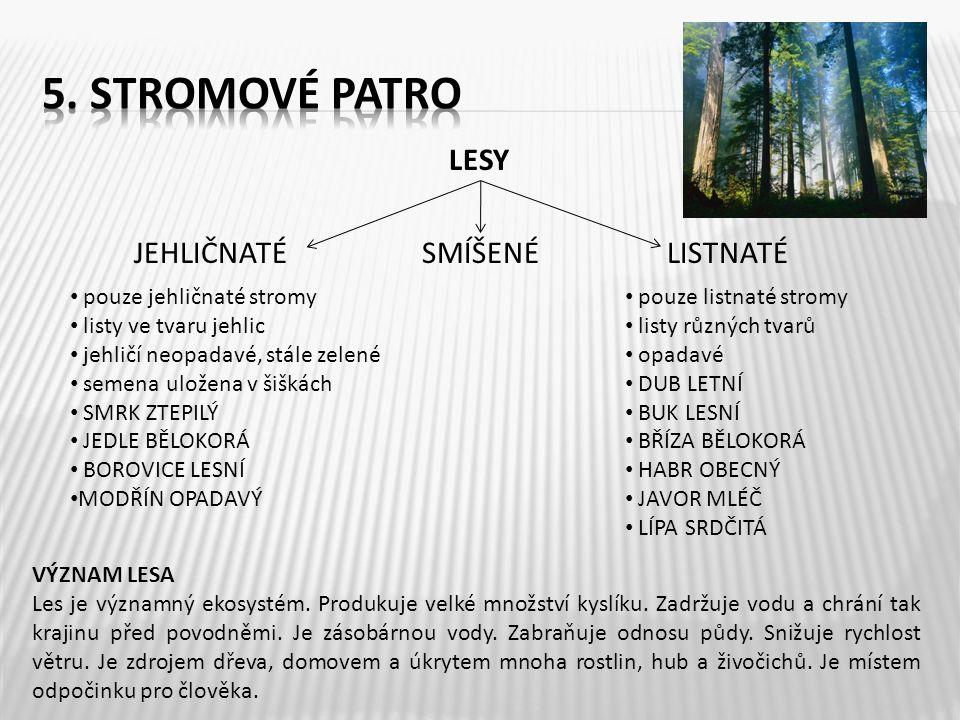 5. Stromové patro LESY JEHLIČNATÉ SMÍŠENÉ LISTNATÉ