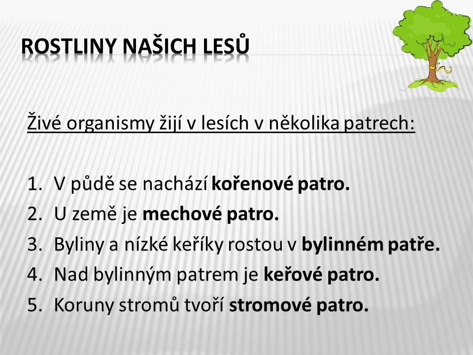 ROSTLINY NAŠICH LESŮ Živé organismy žijí v lesích v několika patrech: