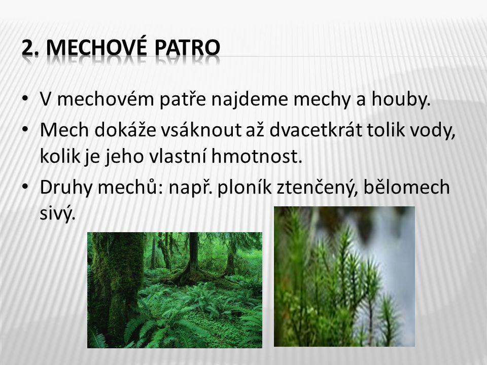 2. Mechové patro V mechovém patře najdeme mechy a houby.