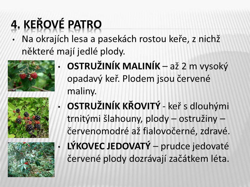 4. Keřové patro Na okrajích lesa a pasekách rostou keře, z nichž některé mají jedlé plody.