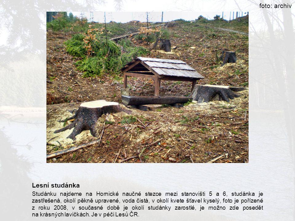 foto: archiv Lesní studánka