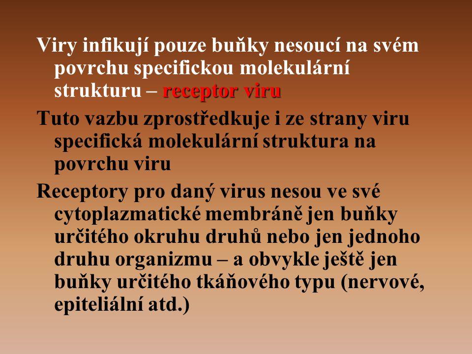 Viry infikují pouze buňky nesoucí na svém povrchu specifickou molekulární strukturu – receptor viru