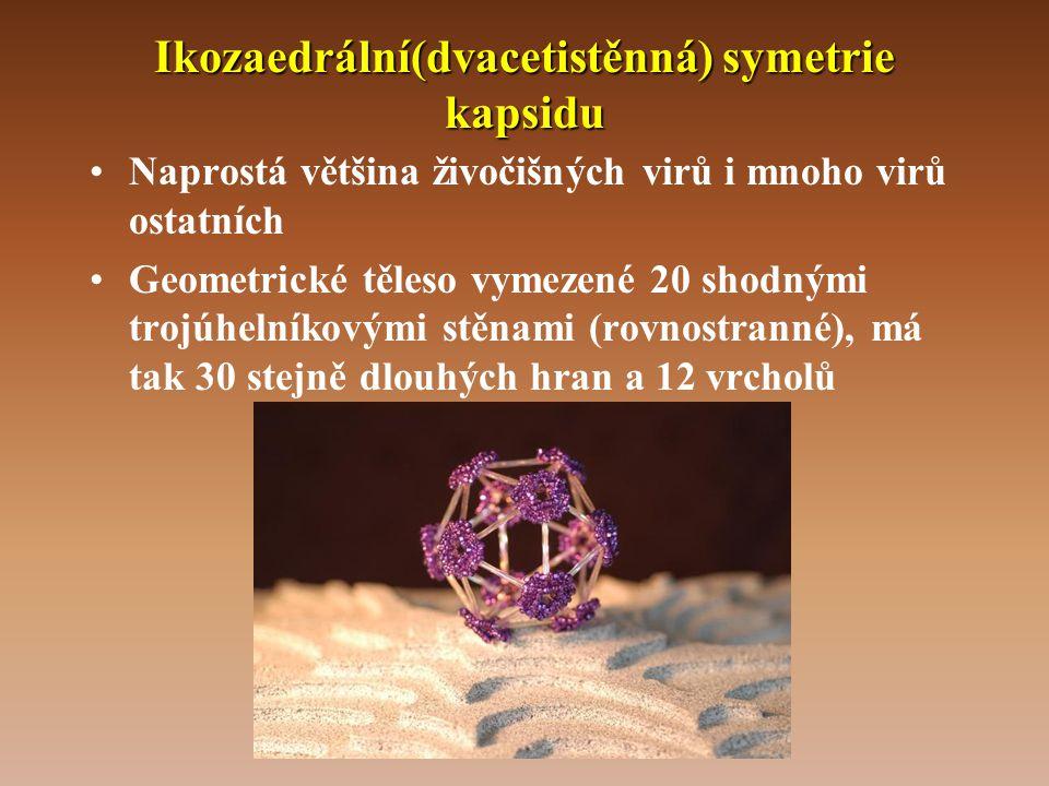 Ikozaedrální(dvacetistěnná) symetrie kapsidu