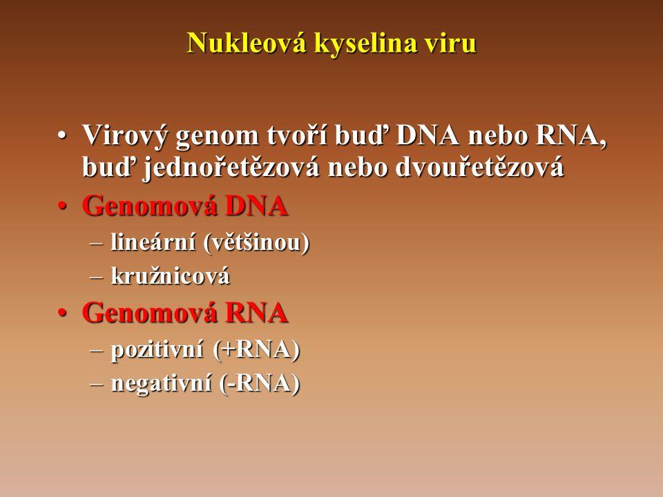 Nukleová kyselina viru