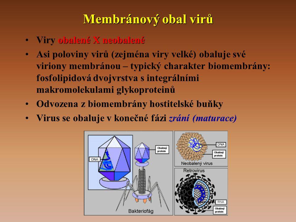 Membránový obal virů Viry obalené X neobalené