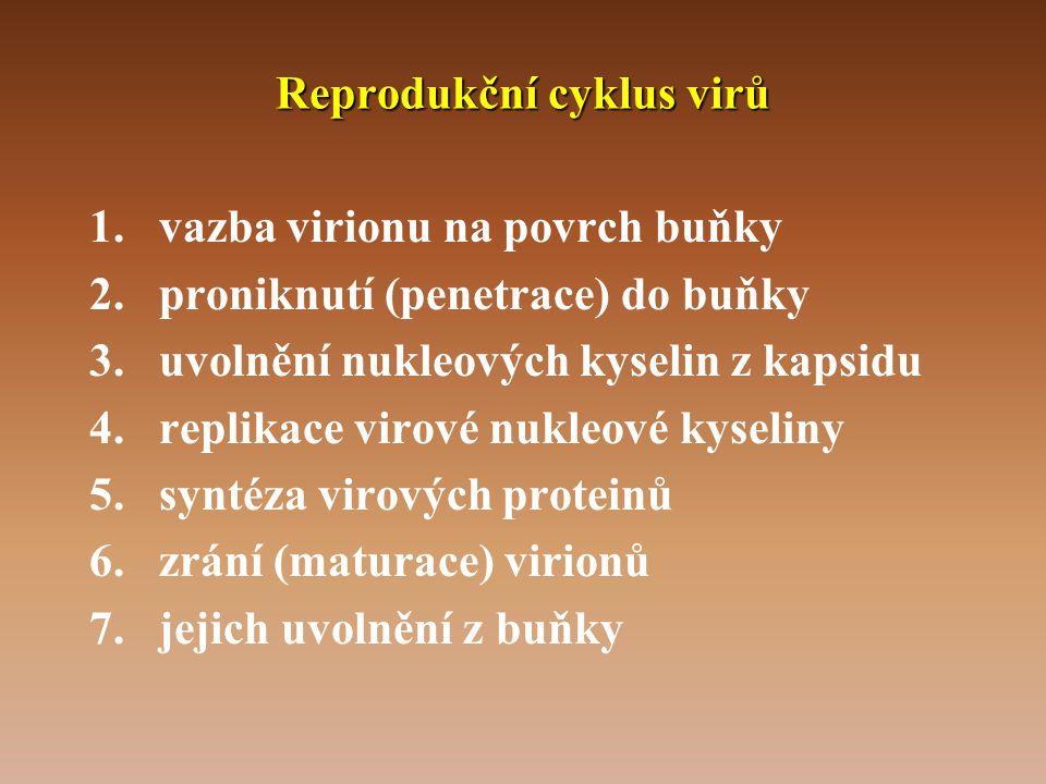 Reprodukční cyklus virů