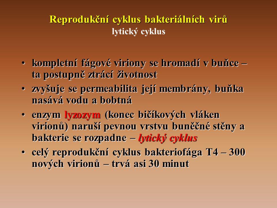 Reprodukční cyklus bakteriálních virů lytický cyklus