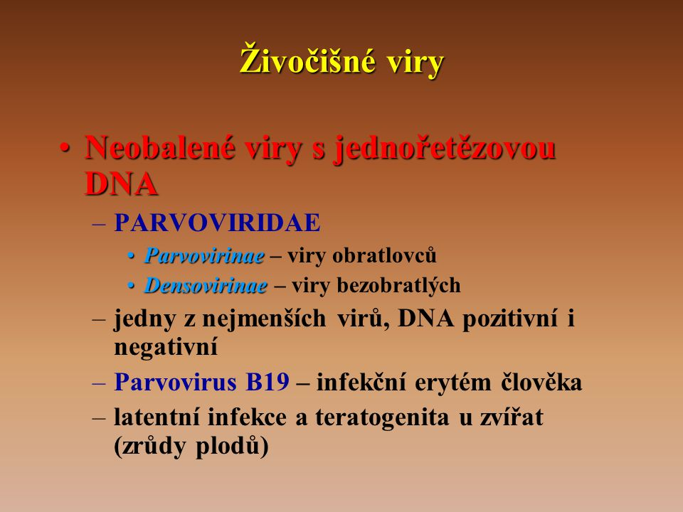 Neobalené viry s jednořetězovou DNA