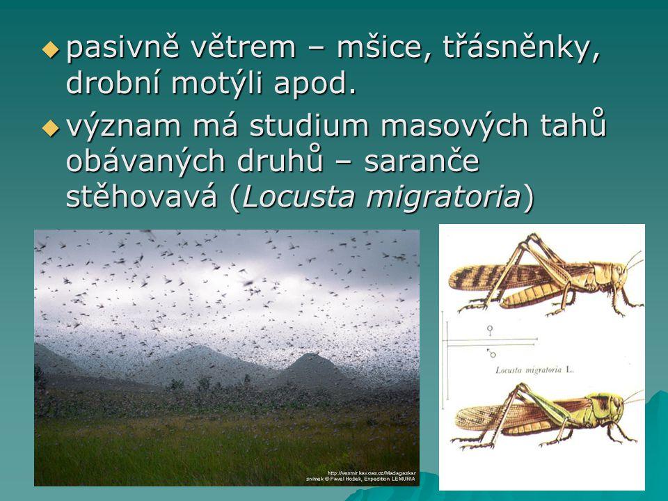 pasivně větrem – mšice, třásněnky, drobní motýli apod.