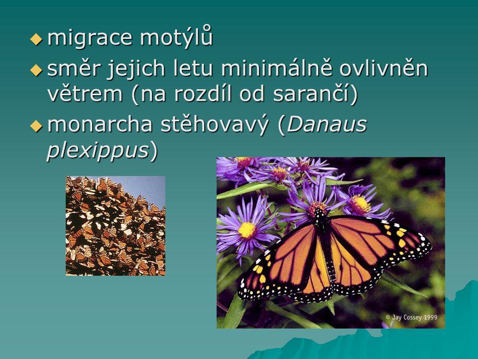migrace motýlů směr jejich letu minimálně ovlivněn větrem (na rozdíl od sarančí) monarcha stěhovavý (Danaus plexippus)