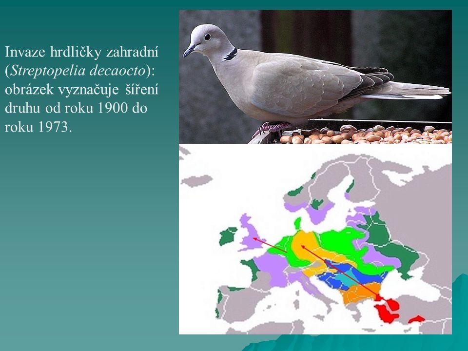 Invaze hrdličky zahradní (Streptopelia decaocto): obrázek vyznačuje šíření druhu od roku 1900 do roku 1973.