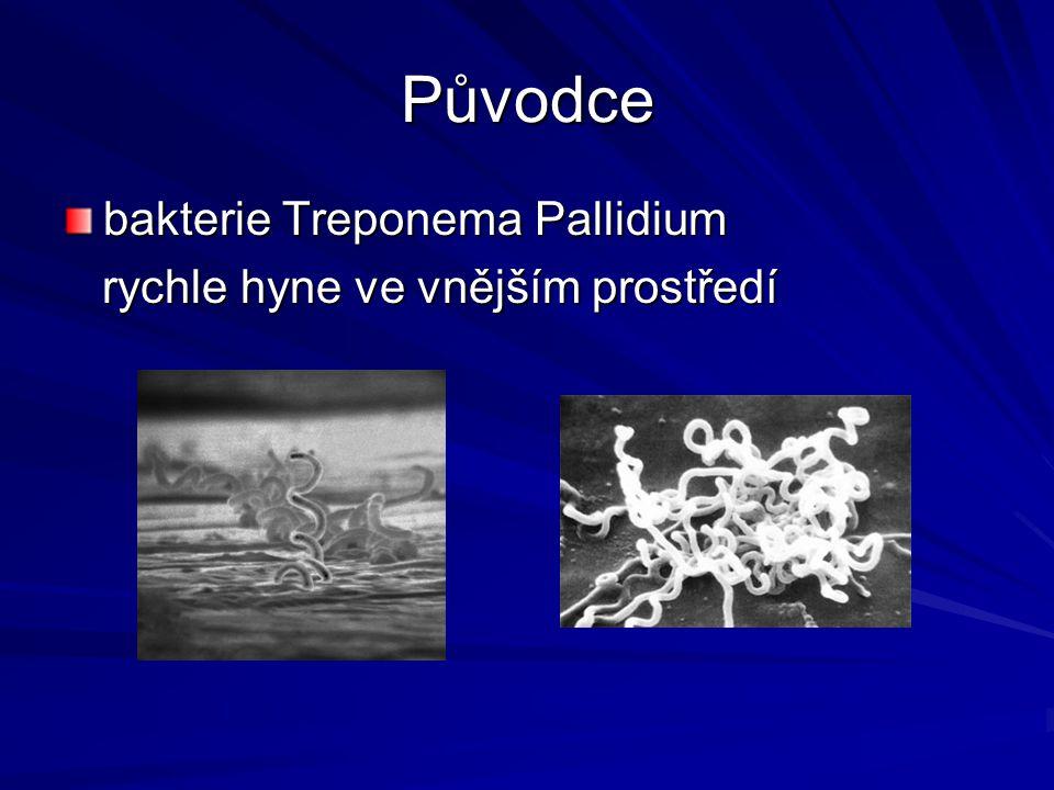 Původce bakterie Treponema Pallidium rychle hyne ve vnějším prostředí