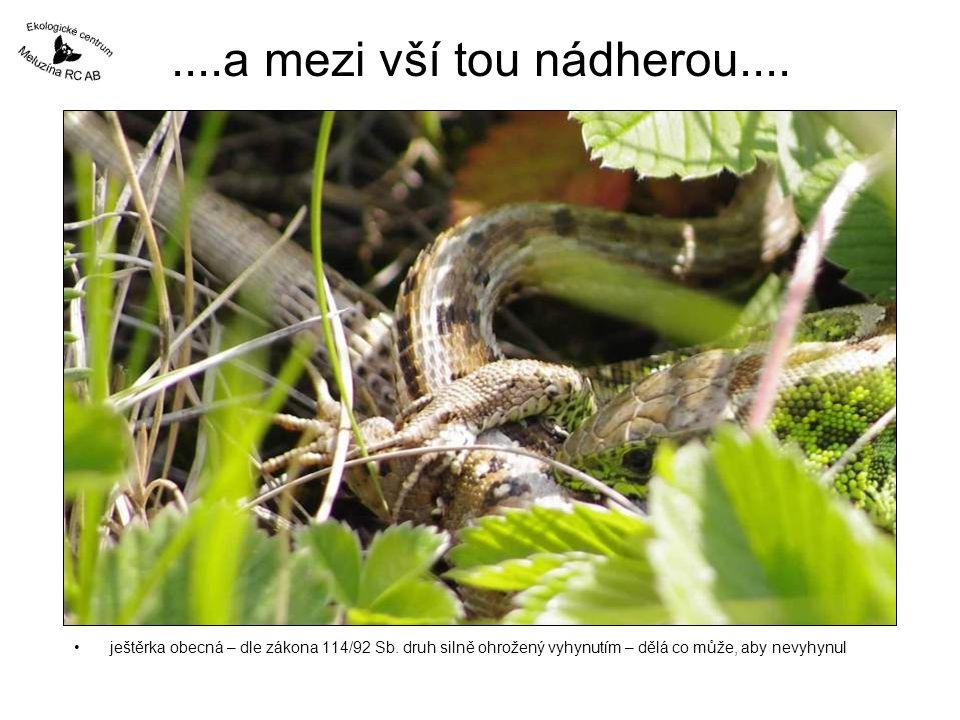 ....a mezi vší tou nádherou.... ještěrka obecná – dle zákona 114/92 Sb.