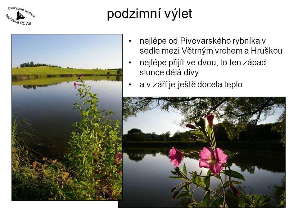 podzimní výlet nejlépe od Pivovarského rybníka v sedle mezi Větrným vrchem a Hruškou. nejlépe přijít ve dvou, to ten západ slunce dělá divy.