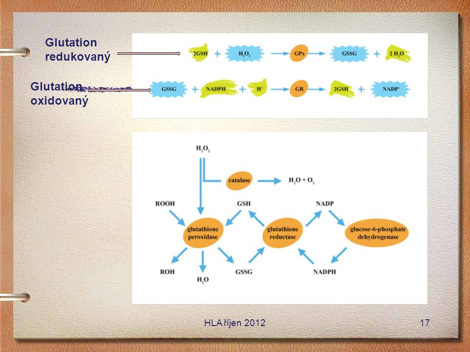 Glutation redukovaný Glutation oxidovaný HLA říjen 2012