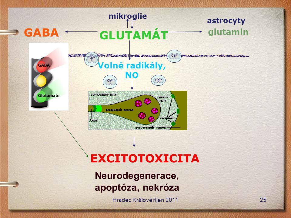 GABA GLUTAMÁT EXCITOTOXICITA Neurodegenerace, apoptóza, nekróza