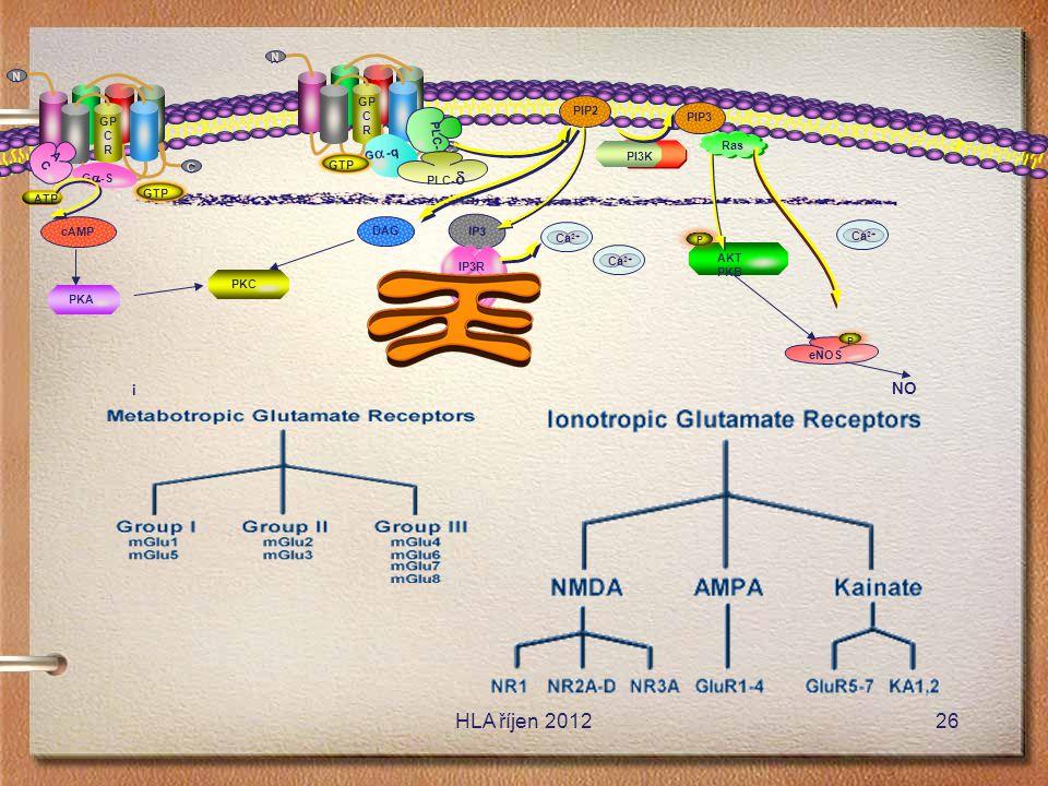 HLA říjen 2012 NO i GP C R N GP C R N PIP2 PLC-b PIP3 AC Ga-q Ras PI3K