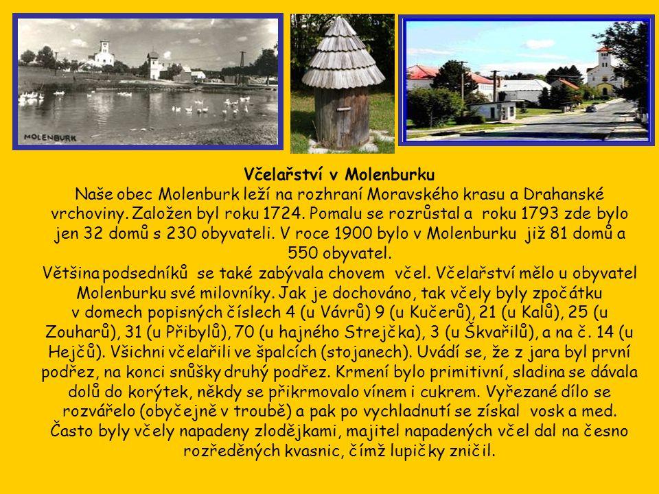 Včelařství v Molenburku Naše obec Molenburk leží na rozhraní Moravského krasu a Drahanské vrchoviny.
