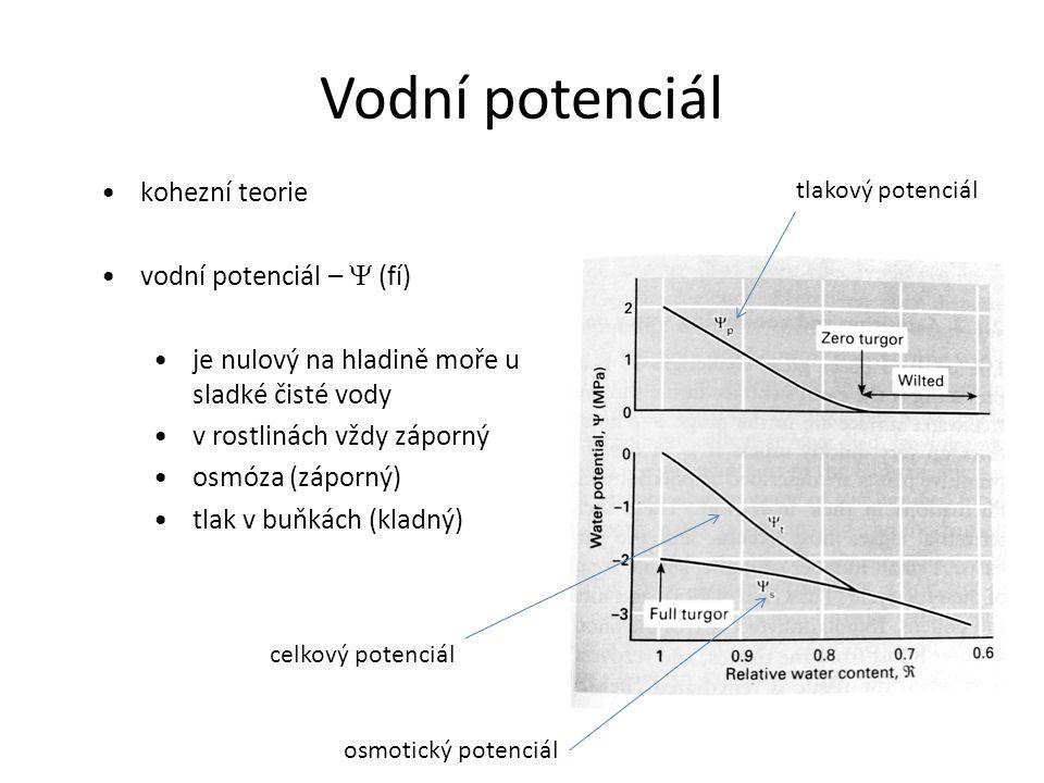 Vodní potenciál kohezní teorie vodní potenciál –  (fí)