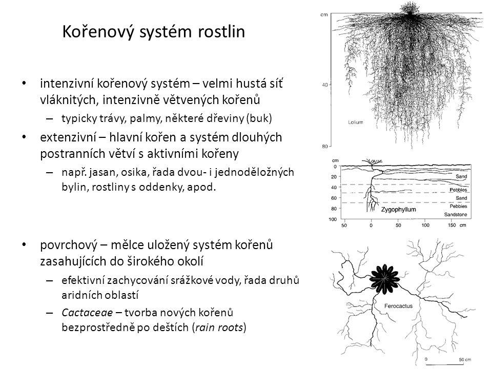 Kořenový systém rostlin