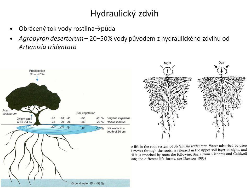 Hydraulický zdvih Obrácený tok vody rostlina→půda