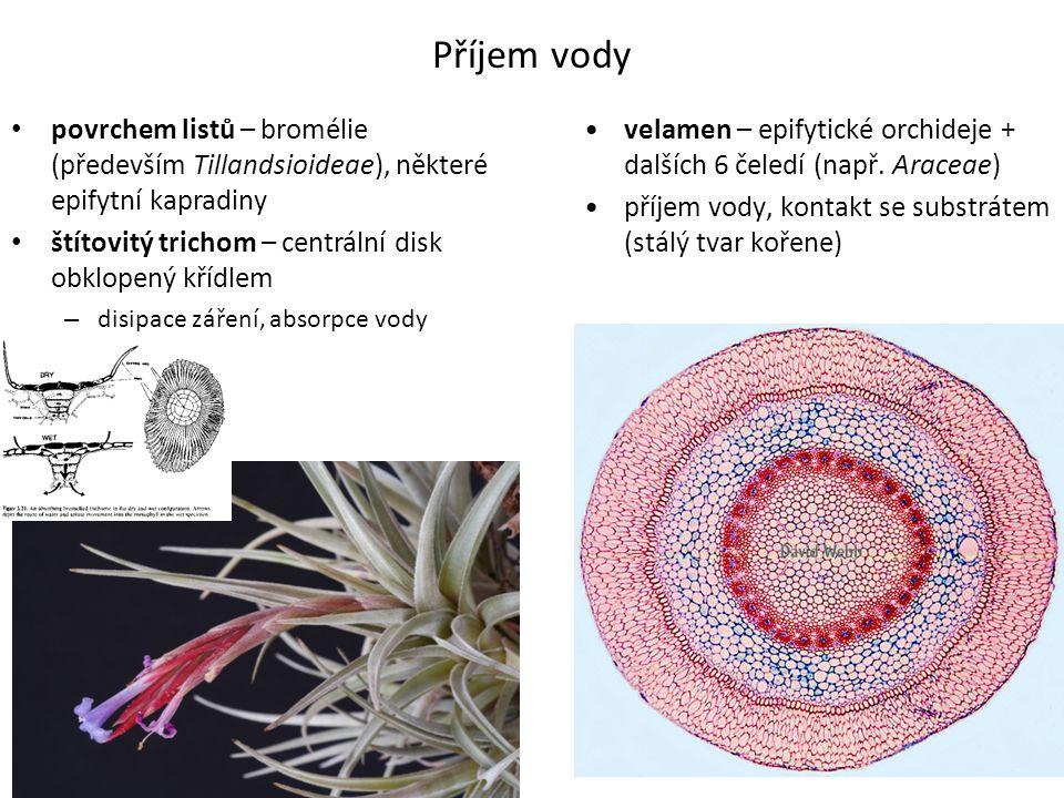 Příjem vody povrchem listů – bromélie (především Tillandsioideae), některé epifytní kapradiny. štítovitý trichom – centrální disk obklopený křídlem.