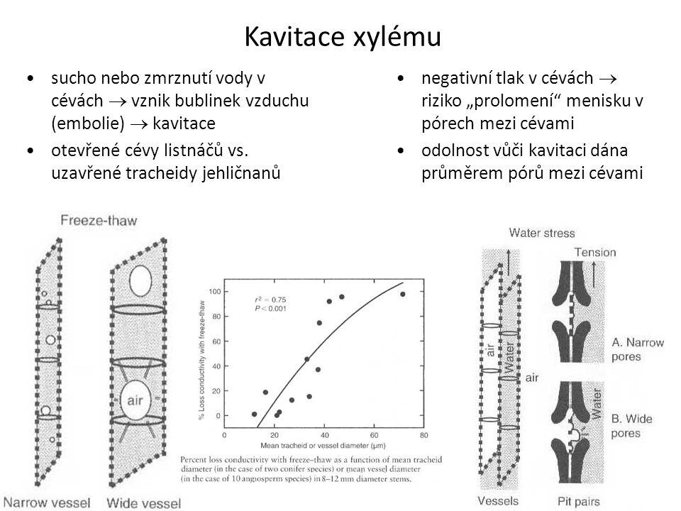Kavitace xylému sucho nebo zmrznutí vody v cévách  vznik bublinek vzduchu (embolie)  kavitace.