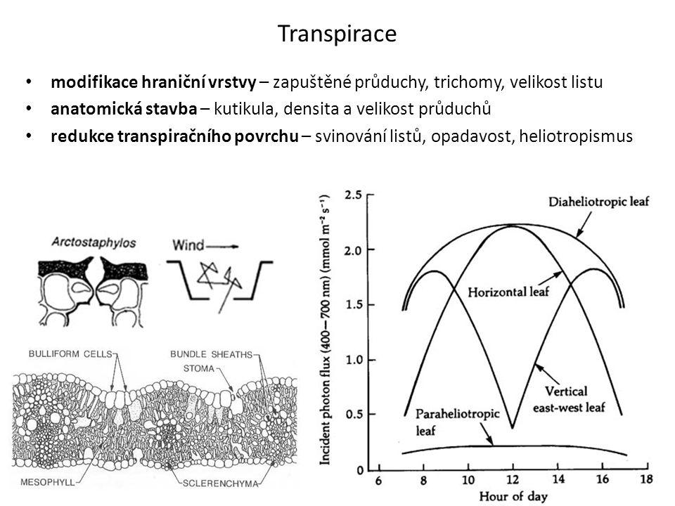 Transpirace modifikace hraniční vrstvy – zapuštěné průduchy, trichomy, velikost listu. anatomická stavba – kutikula, densita a velikost průduchů.