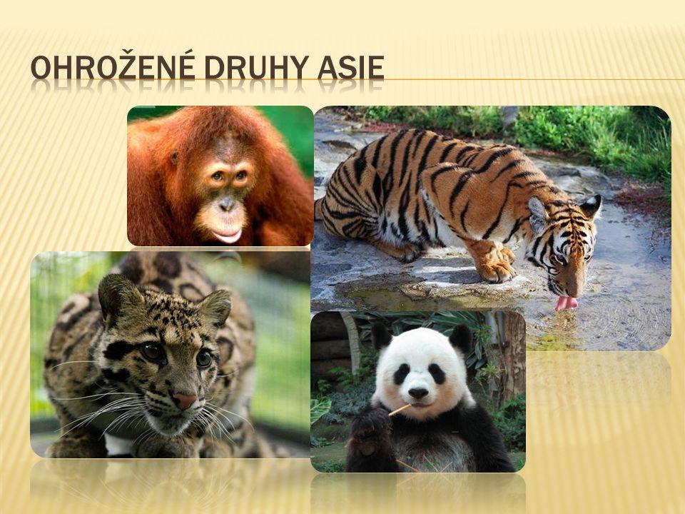 Ohrožené druhy Asie