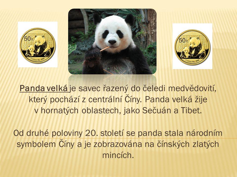 Panda velká je savec řazený do čeledi medvědovití, který pochází z centrální Číny. Panda velká žije v hornatých oblastech, jako Sečuán a Tibet.
