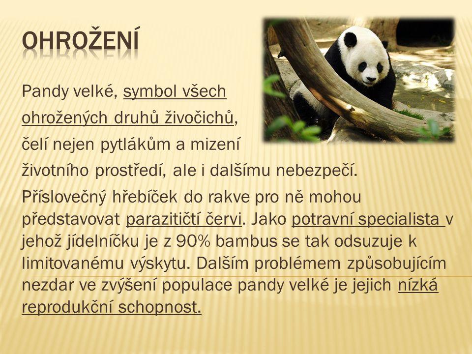Ohrožení Pandy velké, symbol všech ohrožených druhů živočichů,