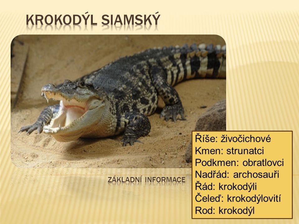Krokodýl siamský Říše: živočichové Kmen: strunatci Podkmen: obratlovci