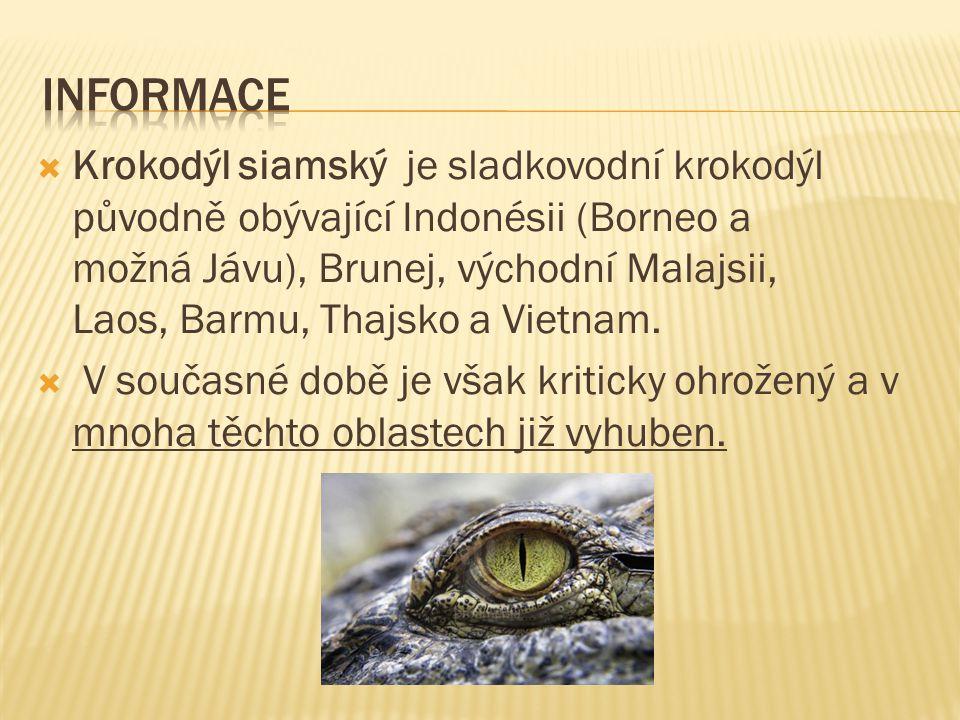 Informace