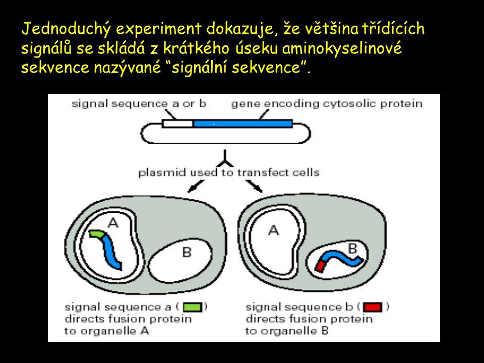 Jednoduchý experiment dokazuje, že většina třídících signálů se skládá z krátkého úseku aminokyselinové sekvence nazývané signální sekvence .