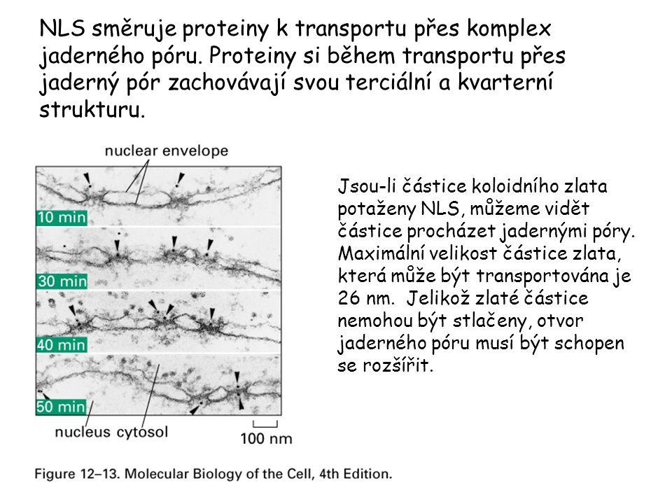 NLS směruje proteiny k transportu přes komplex jaderného póru