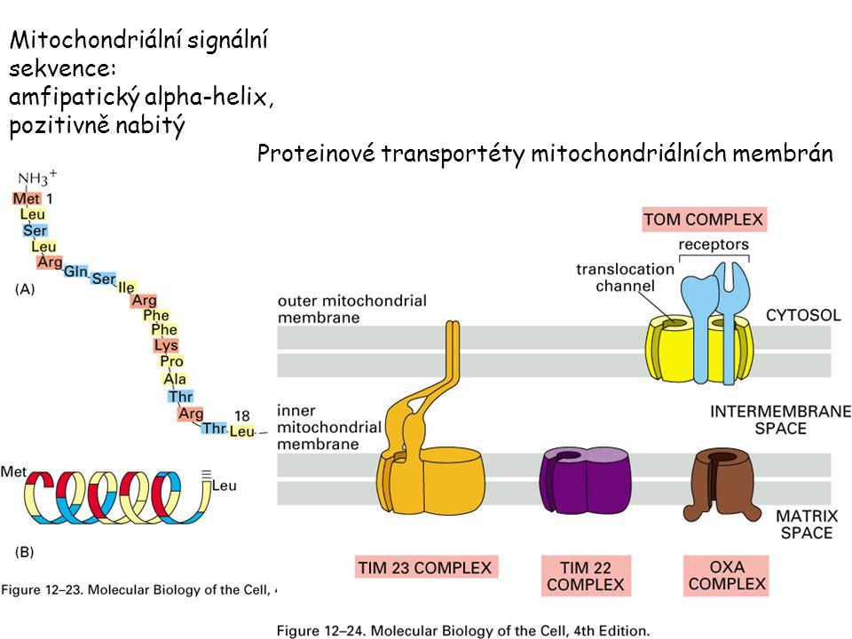 Mitochondriální signální sekvence: