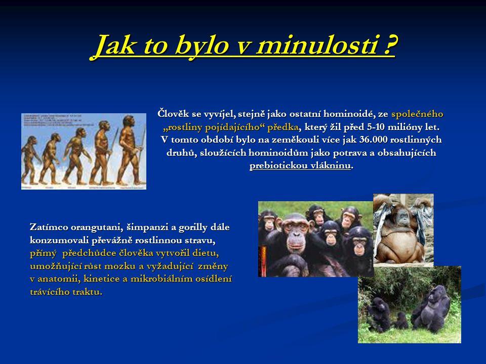 Jak to bylo v minulosti Člověk se vyvíjel, stejně jako ostatní hominoidé, ze společného.